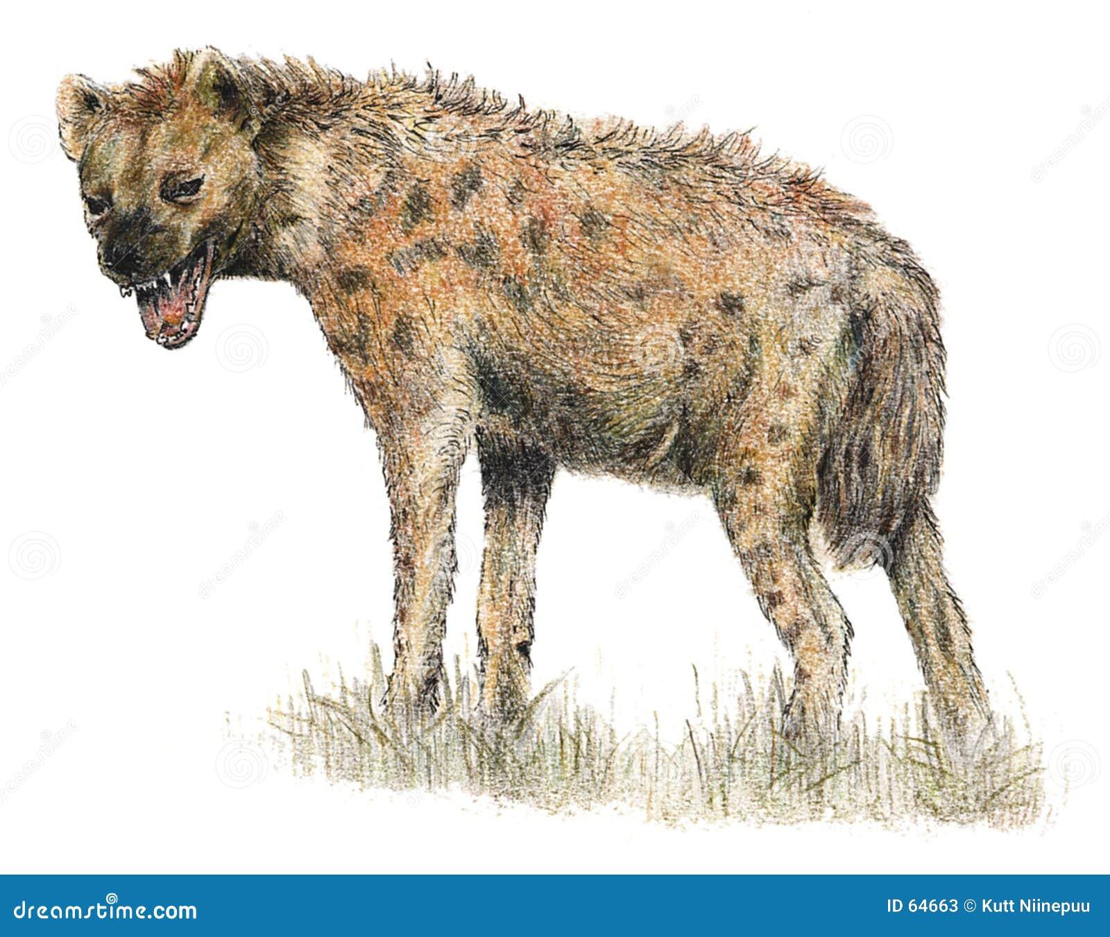 被察觉的鬣狗