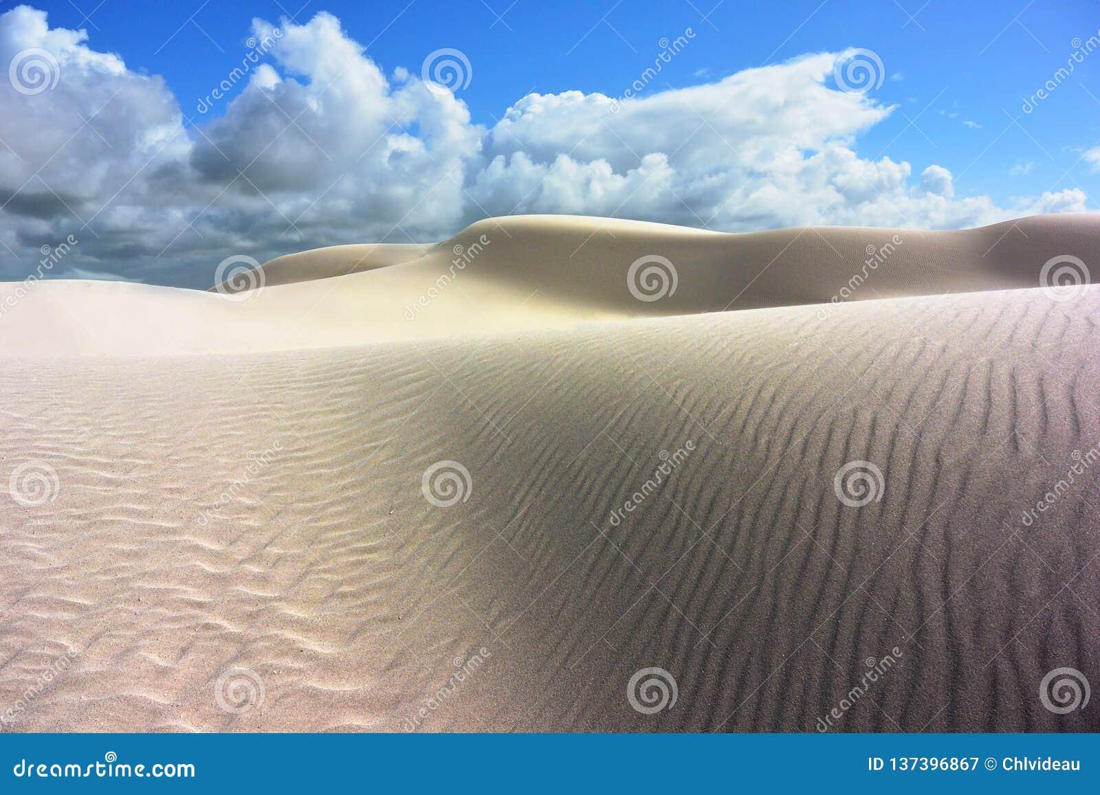 被对比的白色沙丘在一片沙漠在南澳大利亚
