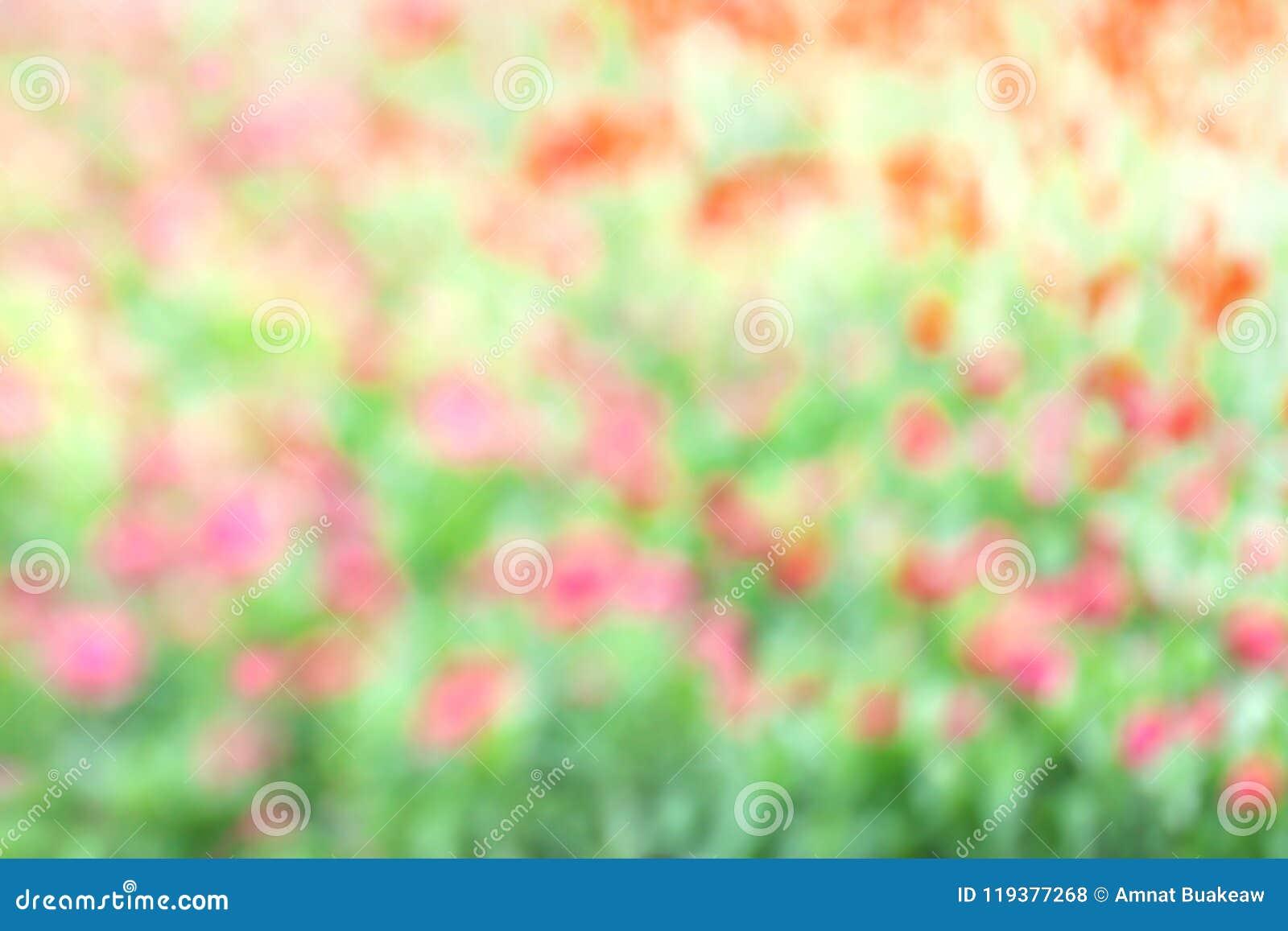 被弄脏的花桃红色绿色软性在庭院背景中