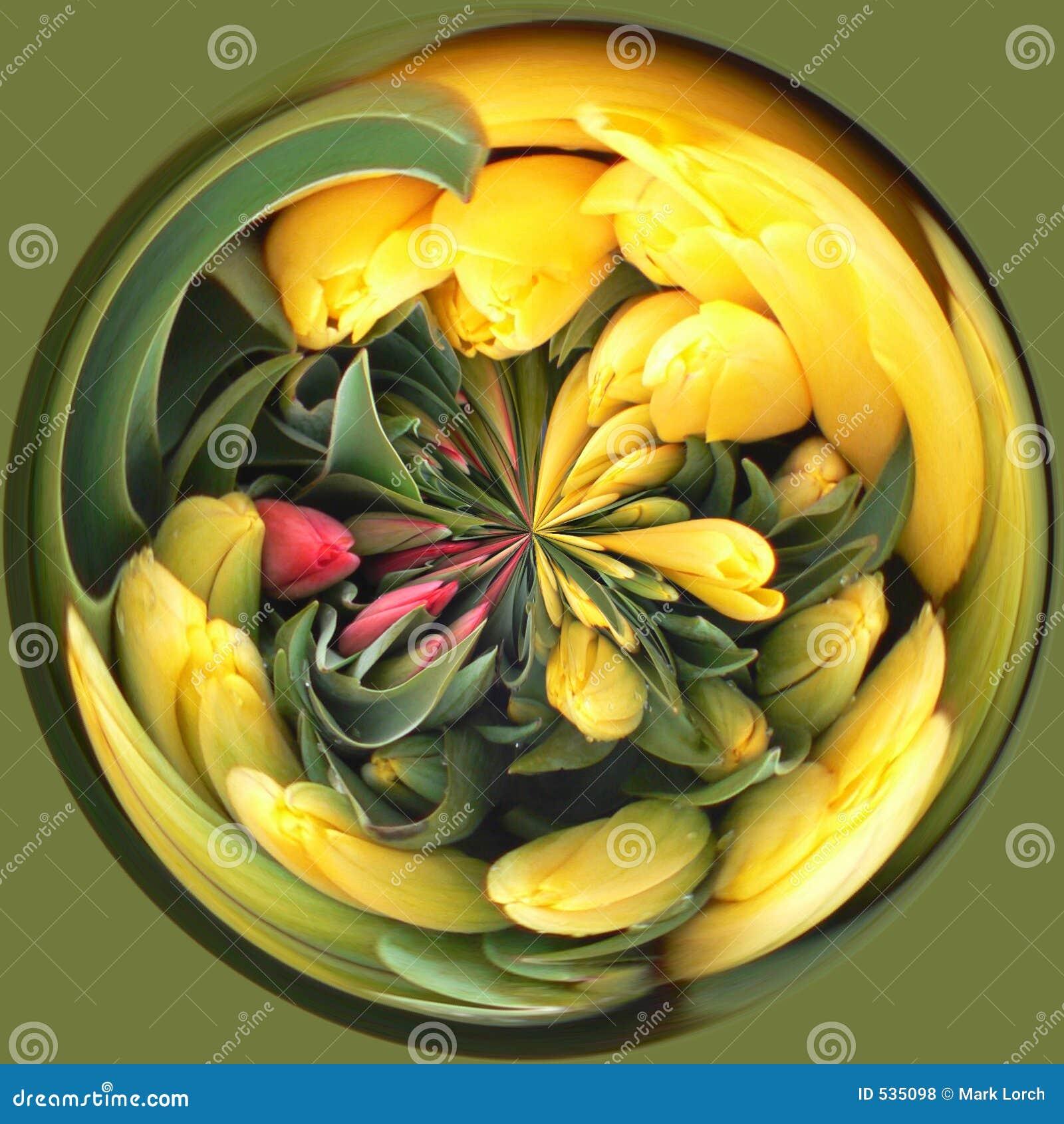 Download 被扭转的郁金香 库存照片. 图片 包括有 植物群, 卖花人, 绿色, 误解, 正方形, 郁金香, 花卉, 圈子 - 535098