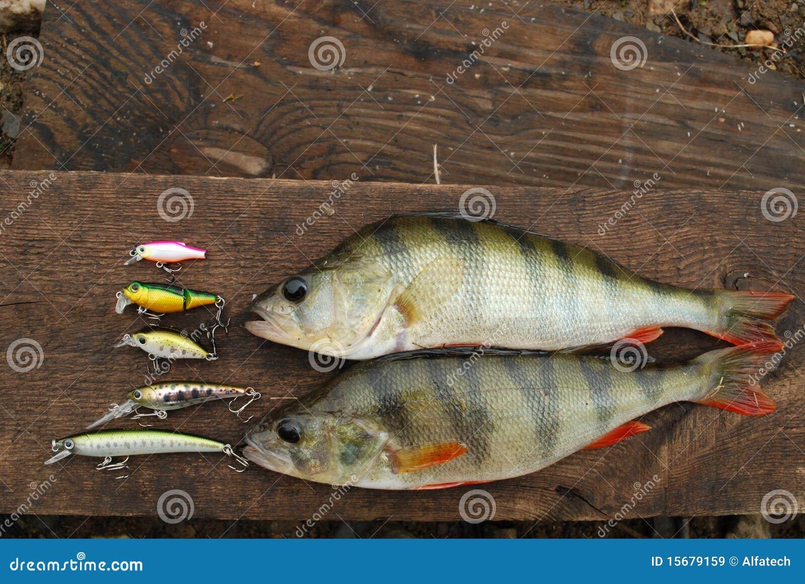 被捉住的捕鱼诱使栖息处二晃摇物