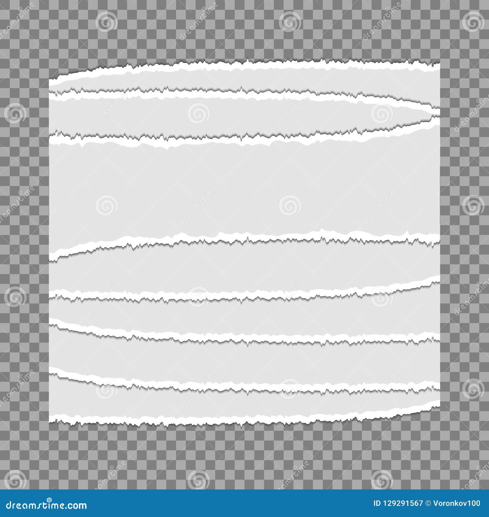 被撕毁的纸张在透明背景的 您设计新例证自然向量的水