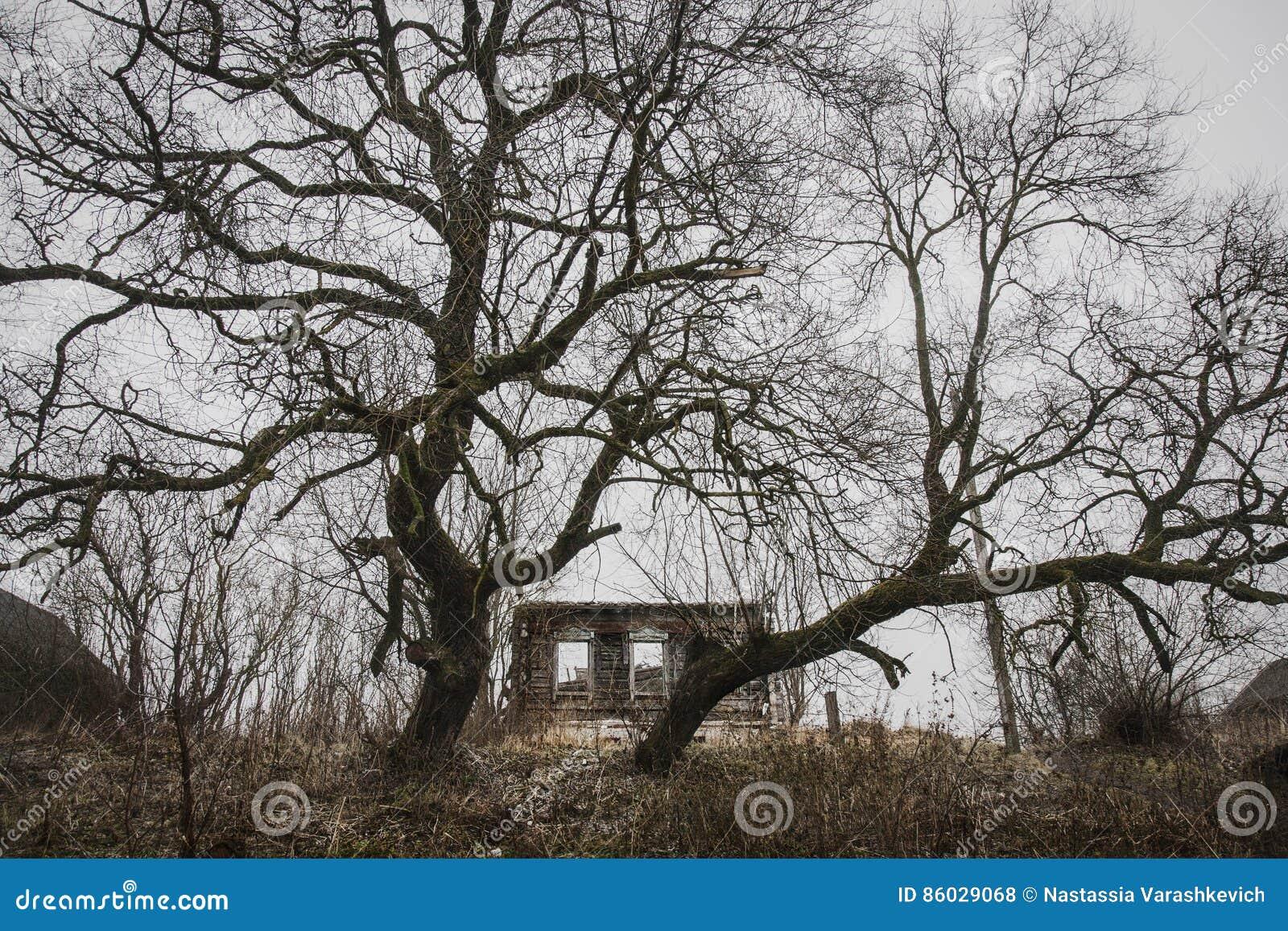 被放弃的和故障的房子由两棵巨大的树守卫了