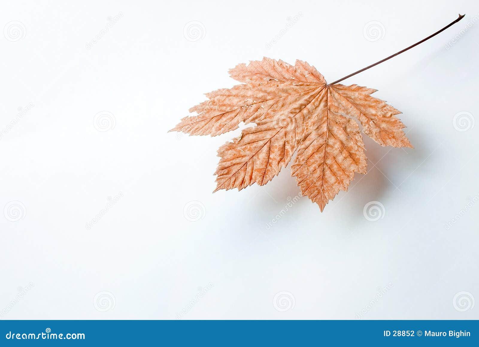 被暂停的叶子