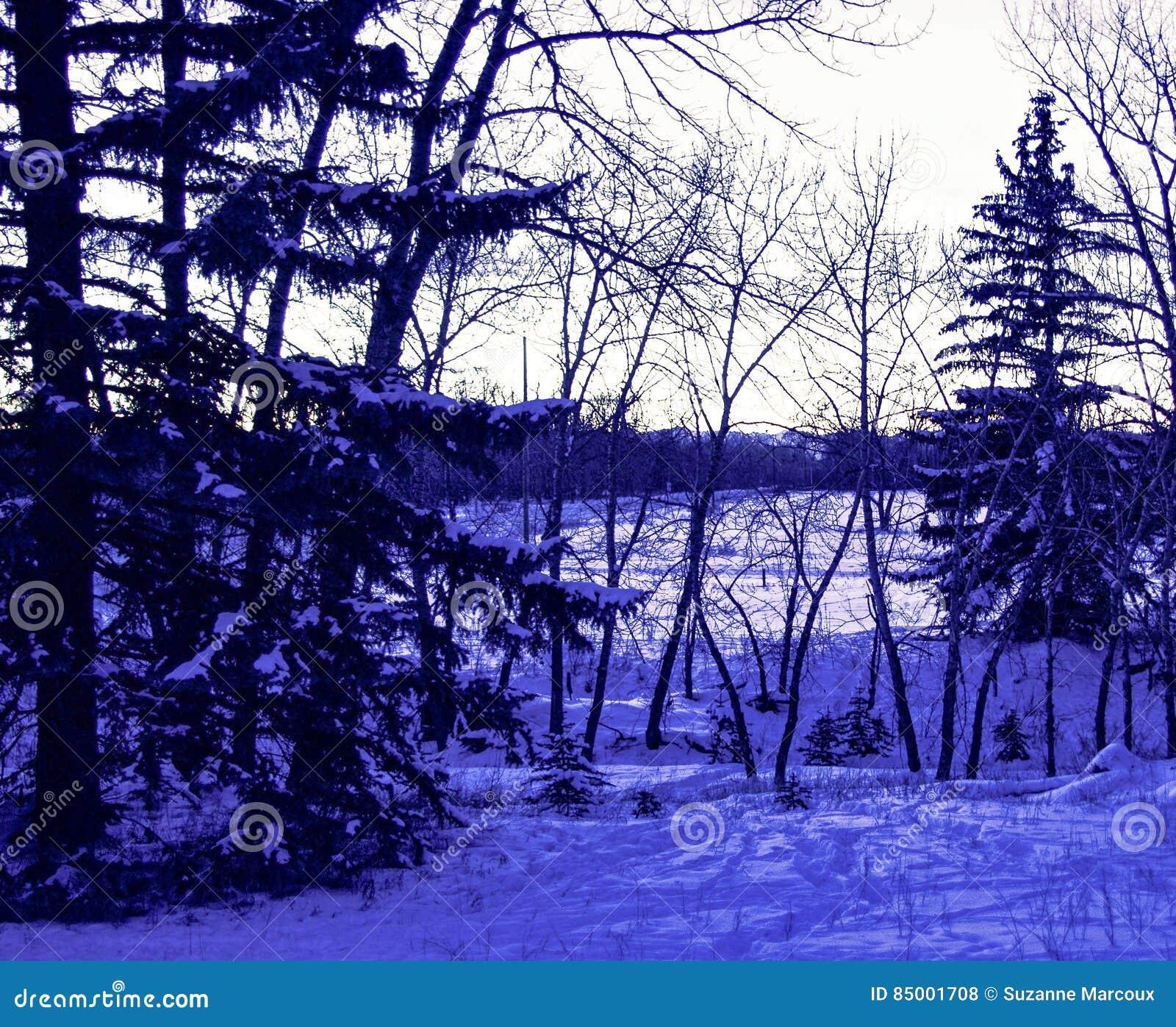 被月光照亮加拿大森林地