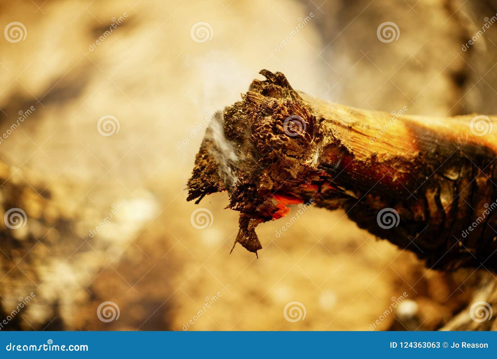 被烧焦的木头