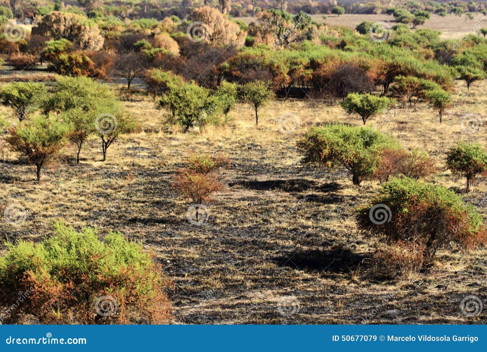Download 被烧的结构树 库存图片. 图片 包括有 草甸, 使荒凉的, 生态, 投反对票, 结构树, 灾害, 横向, 然后 - 50677079