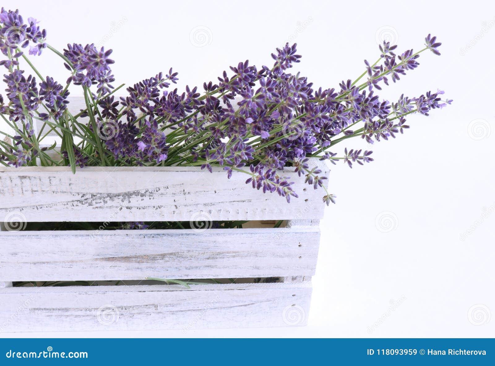 被称呼的储蓄照片 装饰静物画花卉构成 淡紫色鲜花在一个白色木箱的在白色