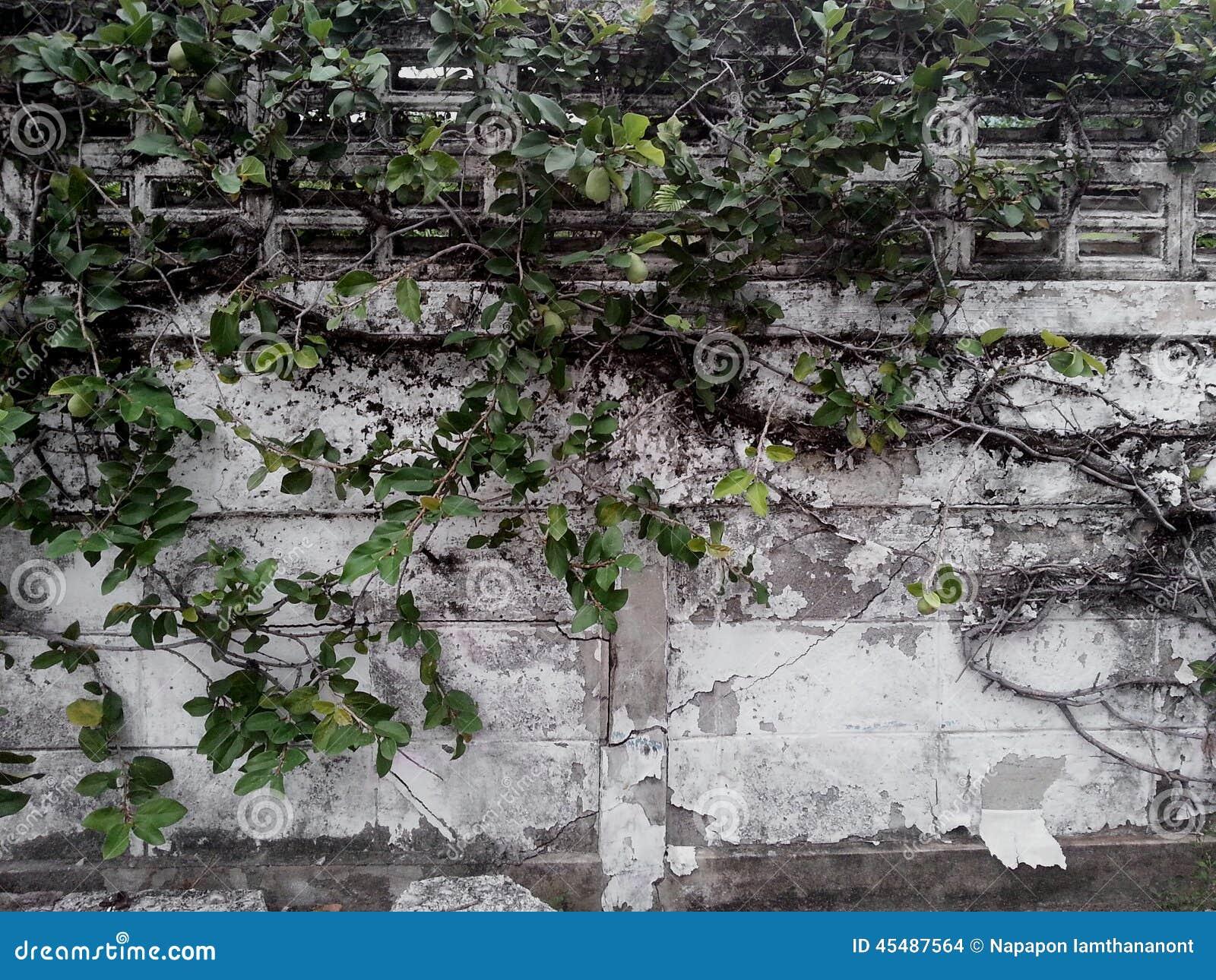 被缠结的墙壁