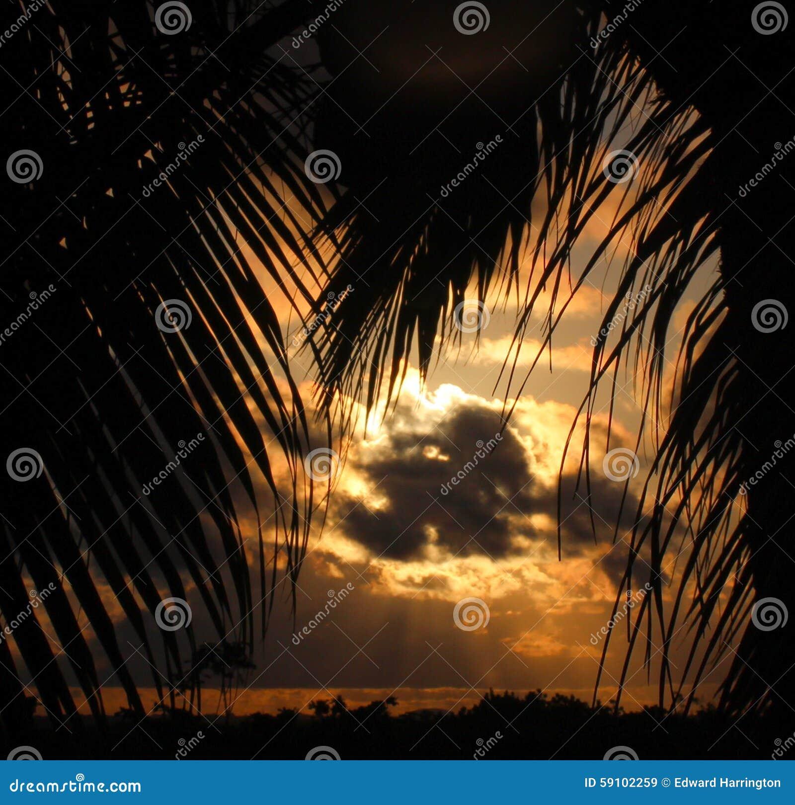 被覆盖的日落构筑与棕榈