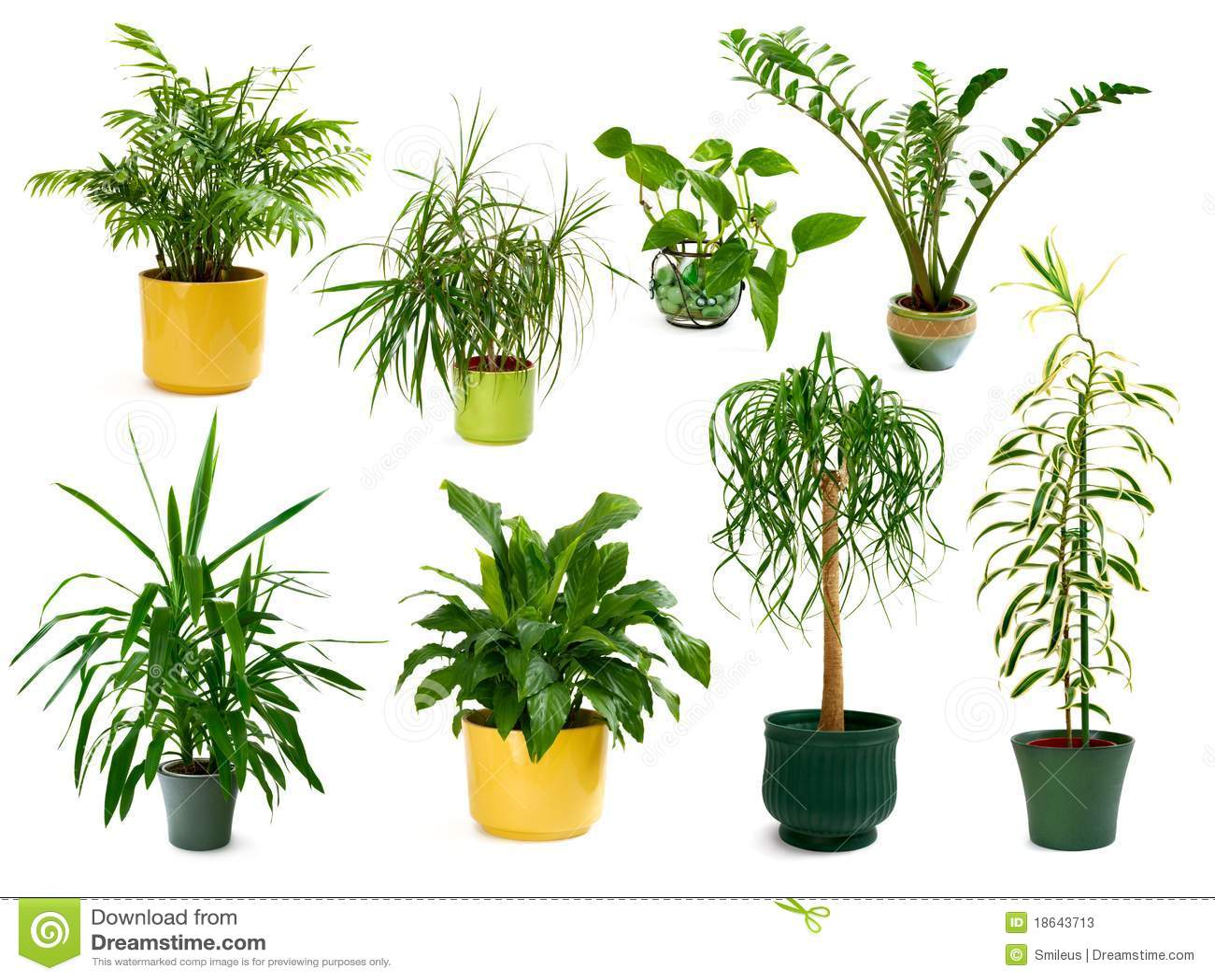 被设置的不同的八个室内植物