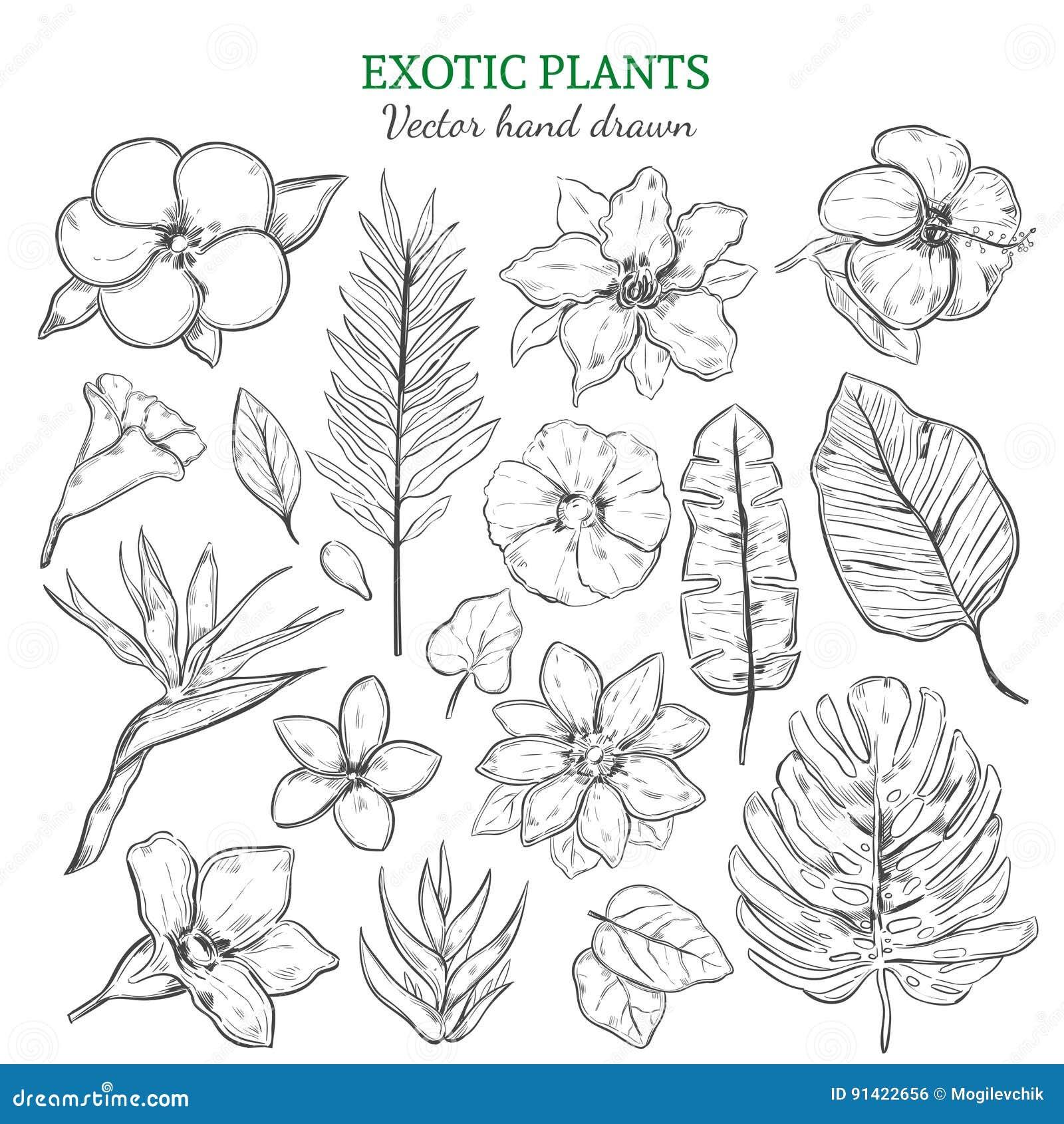 被设置的手拉的异乎寻常的植物