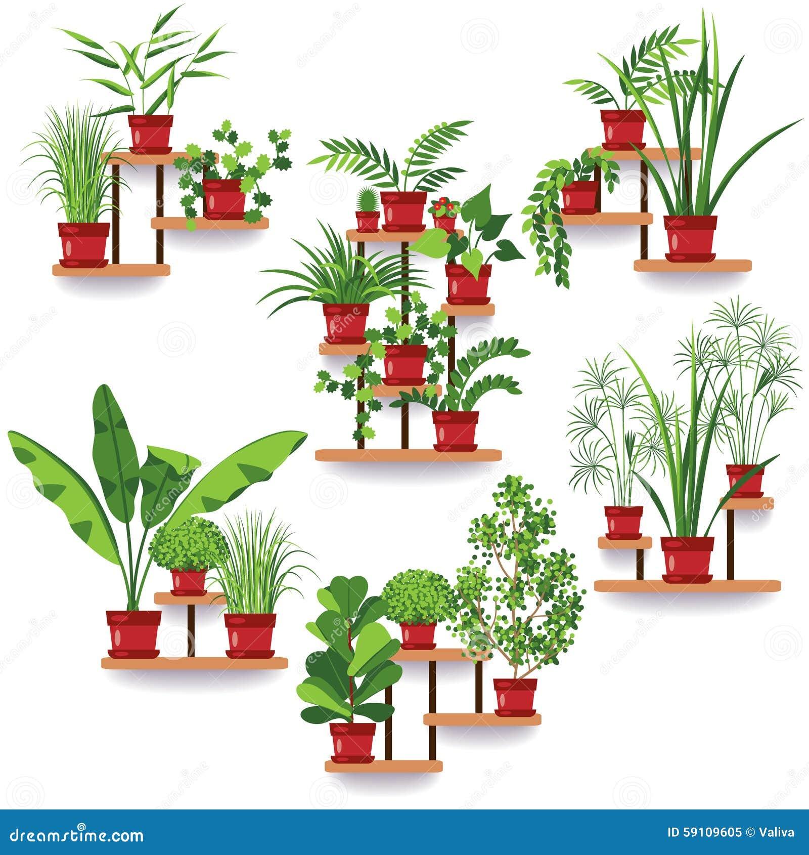被设置的盆栽植物