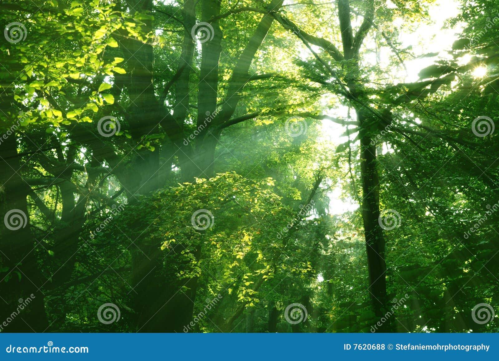 被迷惑的森林地