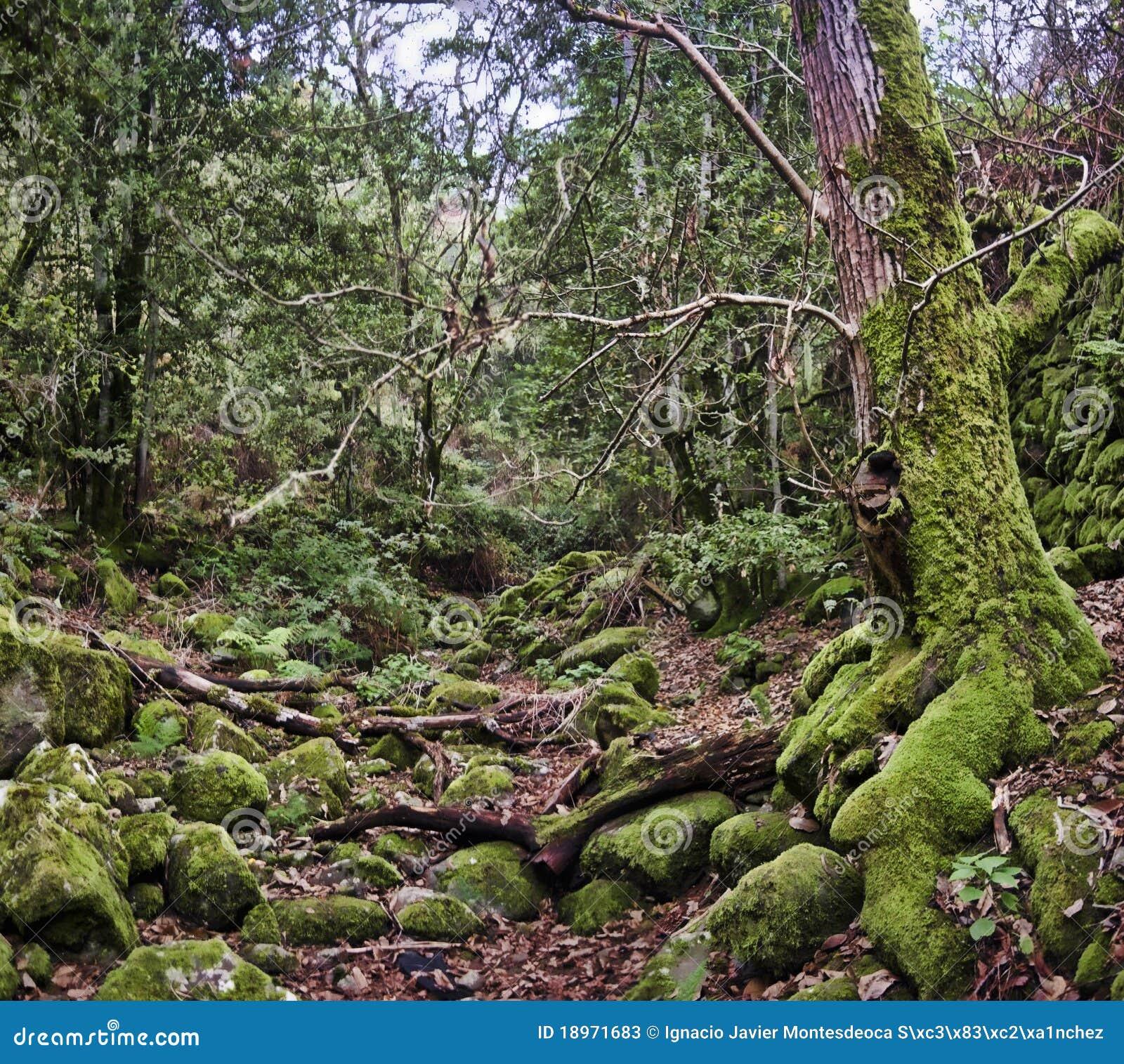 被迷惑的森林