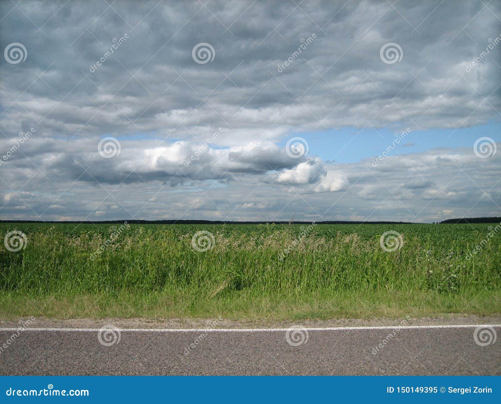 被铺的路光滑的边缘在一个干净的绿色领域的在乡下