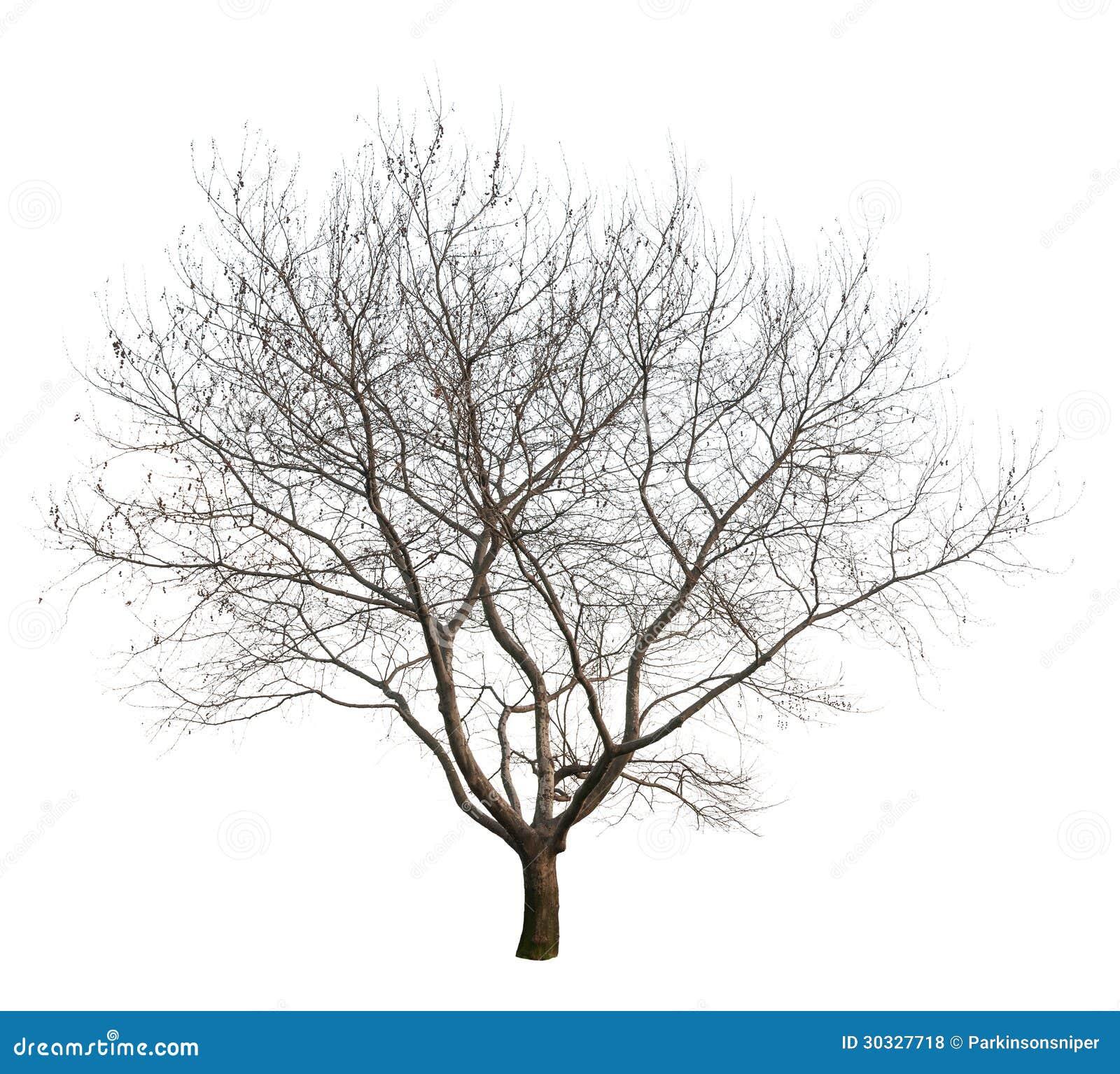 被隔绝的树