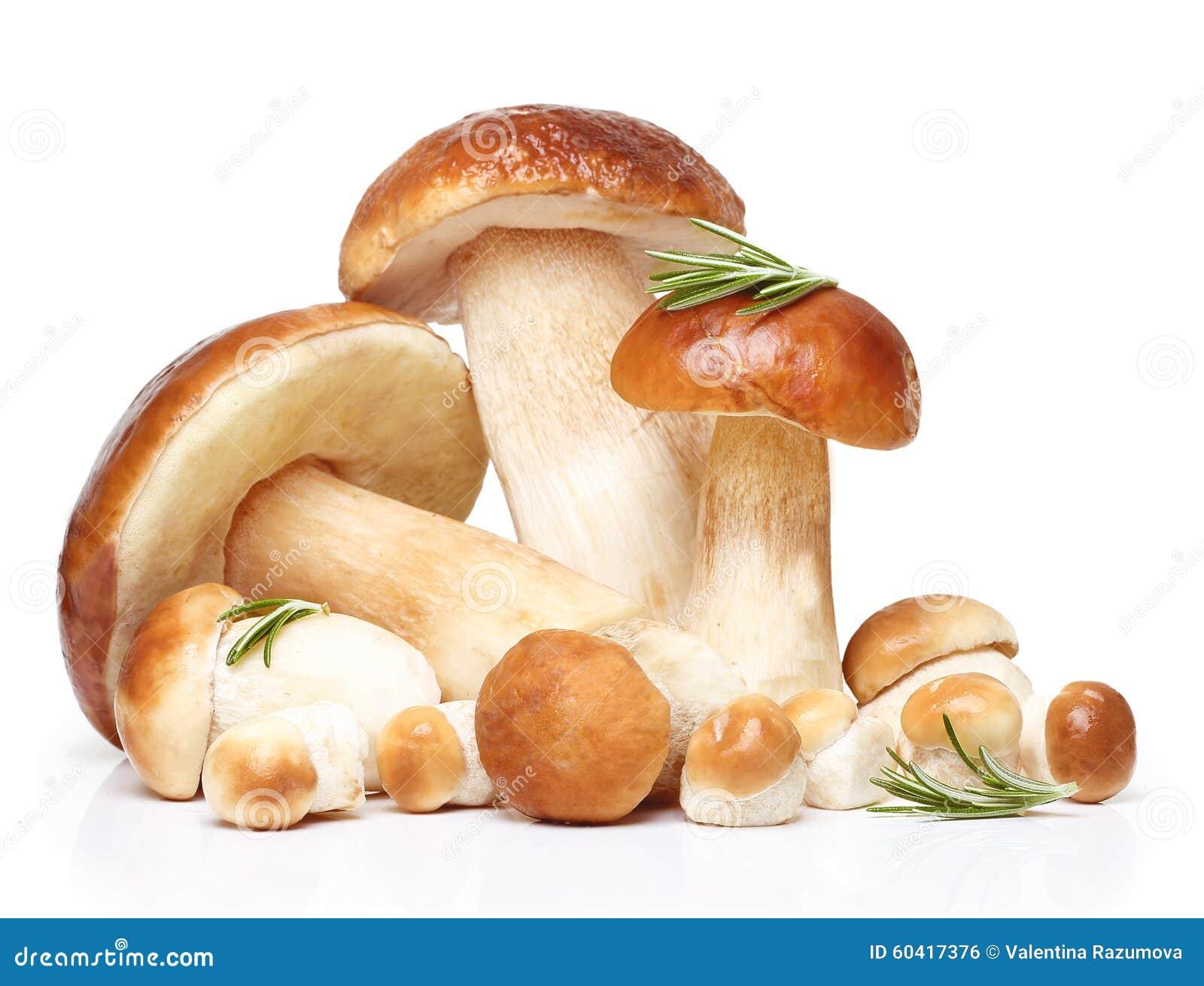 被隔绝的牛肝菌蕈类可食蘑菇