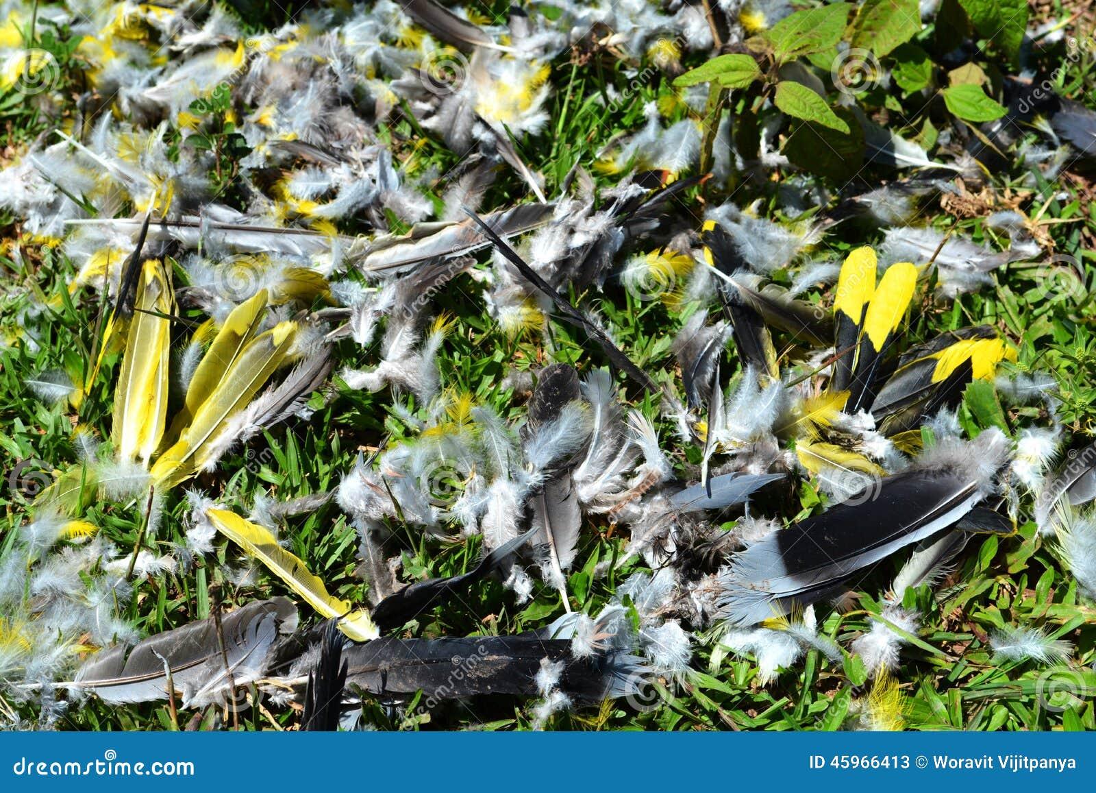 被寻找的鸟羽毛