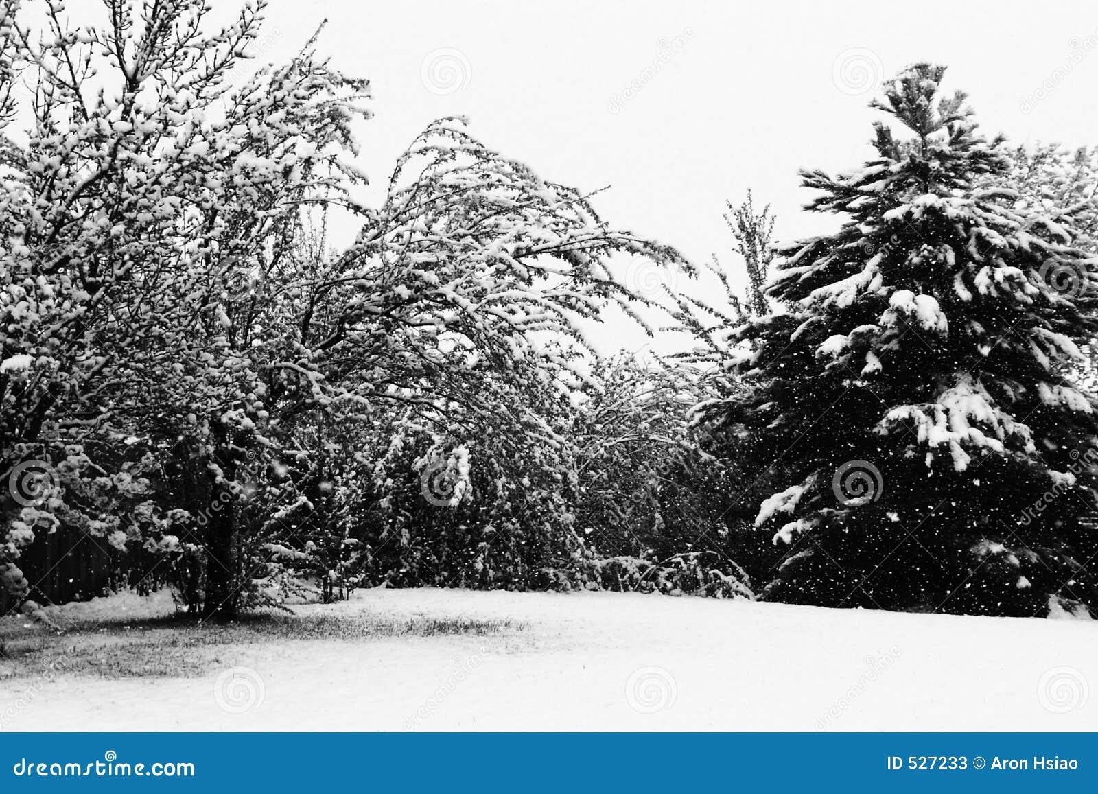 装载雪结构树冬天