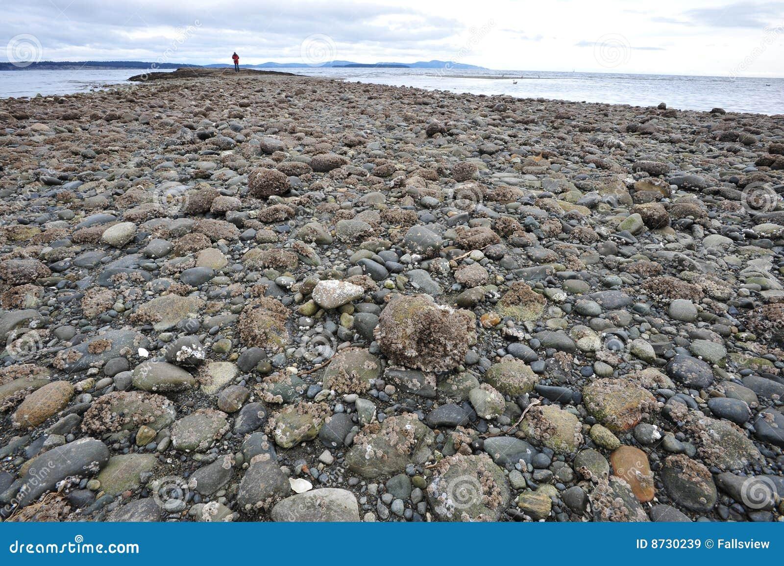 西方加拿大的海岸