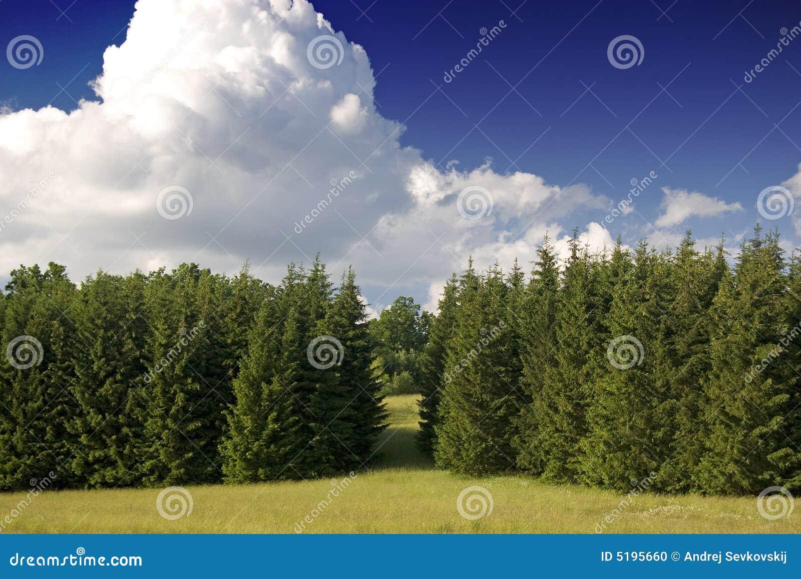 西方欧洲的森林
