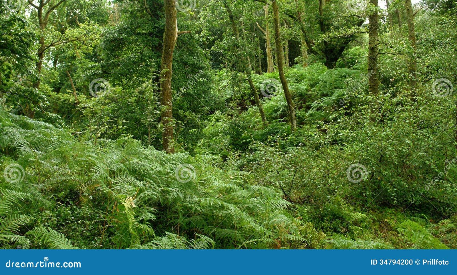 西方高地方式的森林