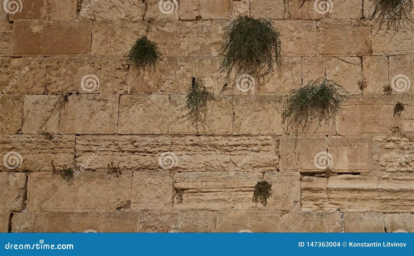 西部墙壁或哭墙是圣地对犹太教在耶路撒冷,以色列老
