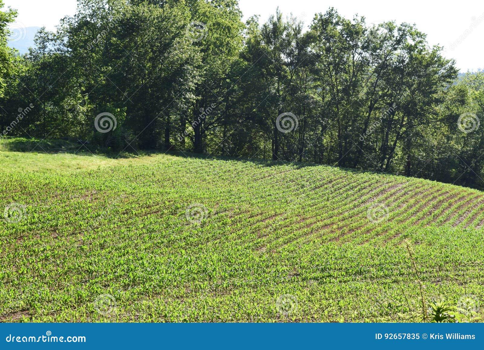 西部NC山农场和被种植的领域