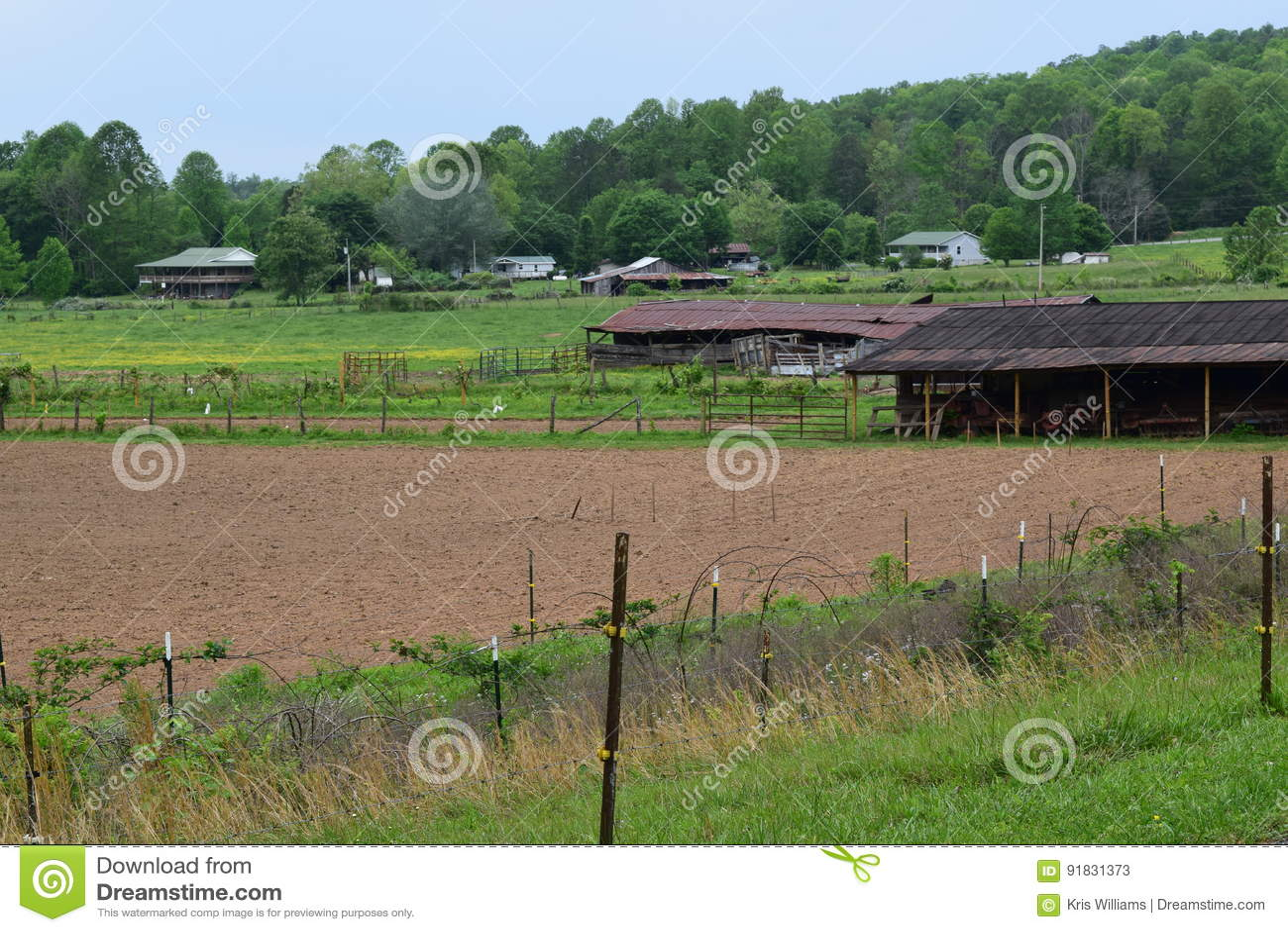 西部NC山农场