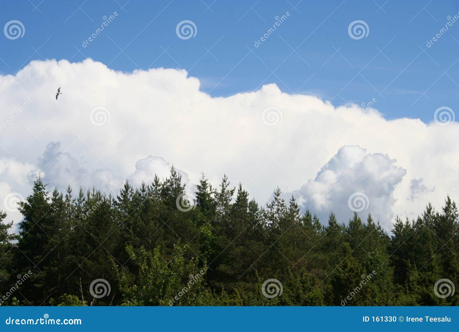 覆盖森林天空