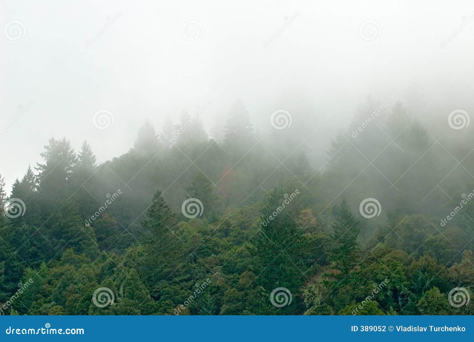 覆盖森林山