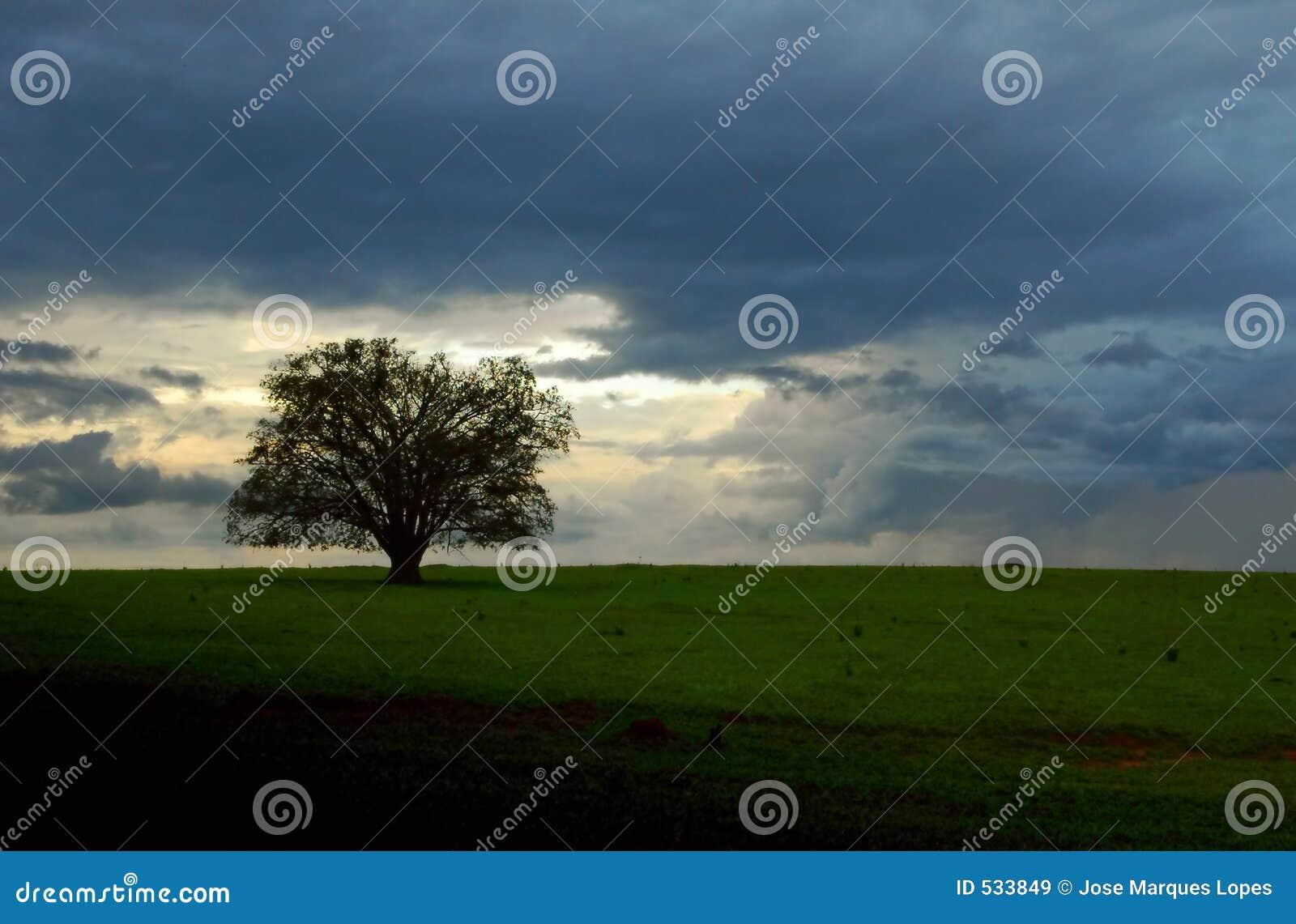 Download 覆盖结构树 库存图片. 图片 包括有 结构树, 日落, 云彩, 墙纸, 农场, 工厂, 横向, 本质 - 533849