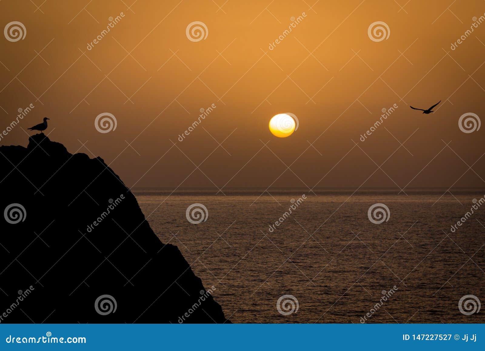 见面在海前面的一个岩石的两只海鸥,当太阳设置在天际时 和平,放松,冷颤