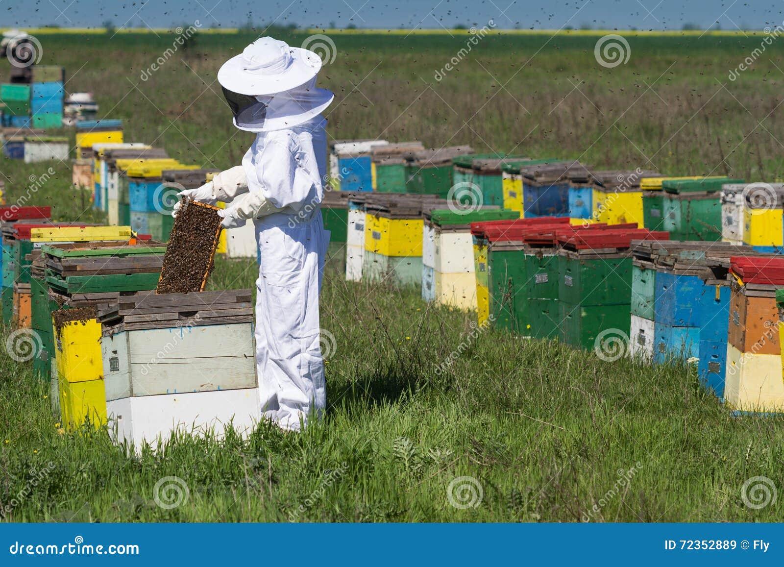 观看在他的蜂蜂房的养蜂家