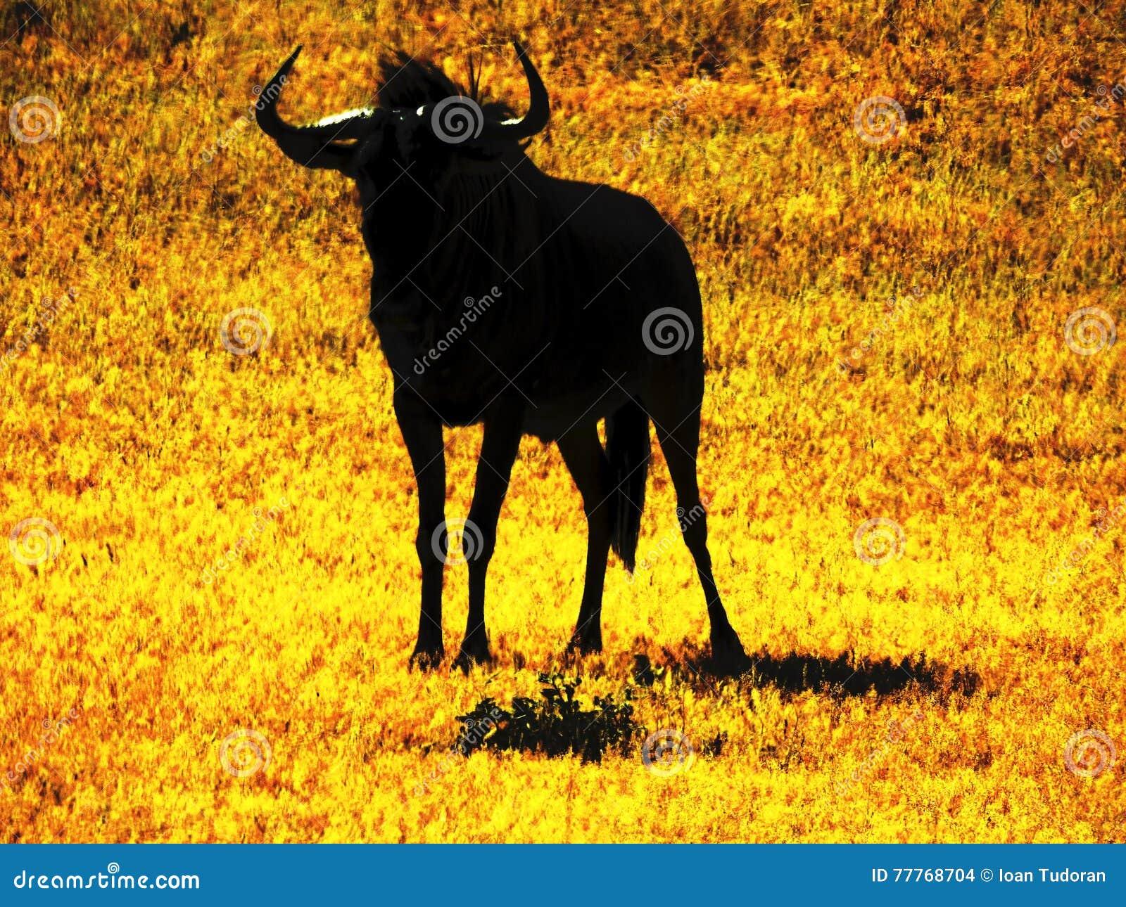 角马,牛羚