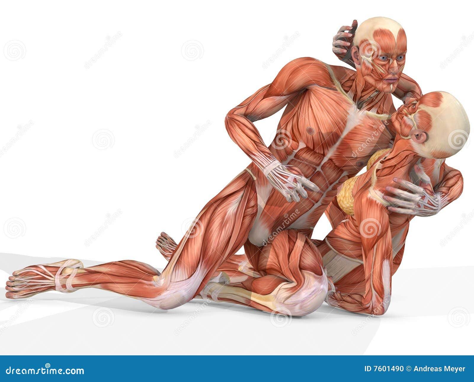 解剖机体夫妇女性男