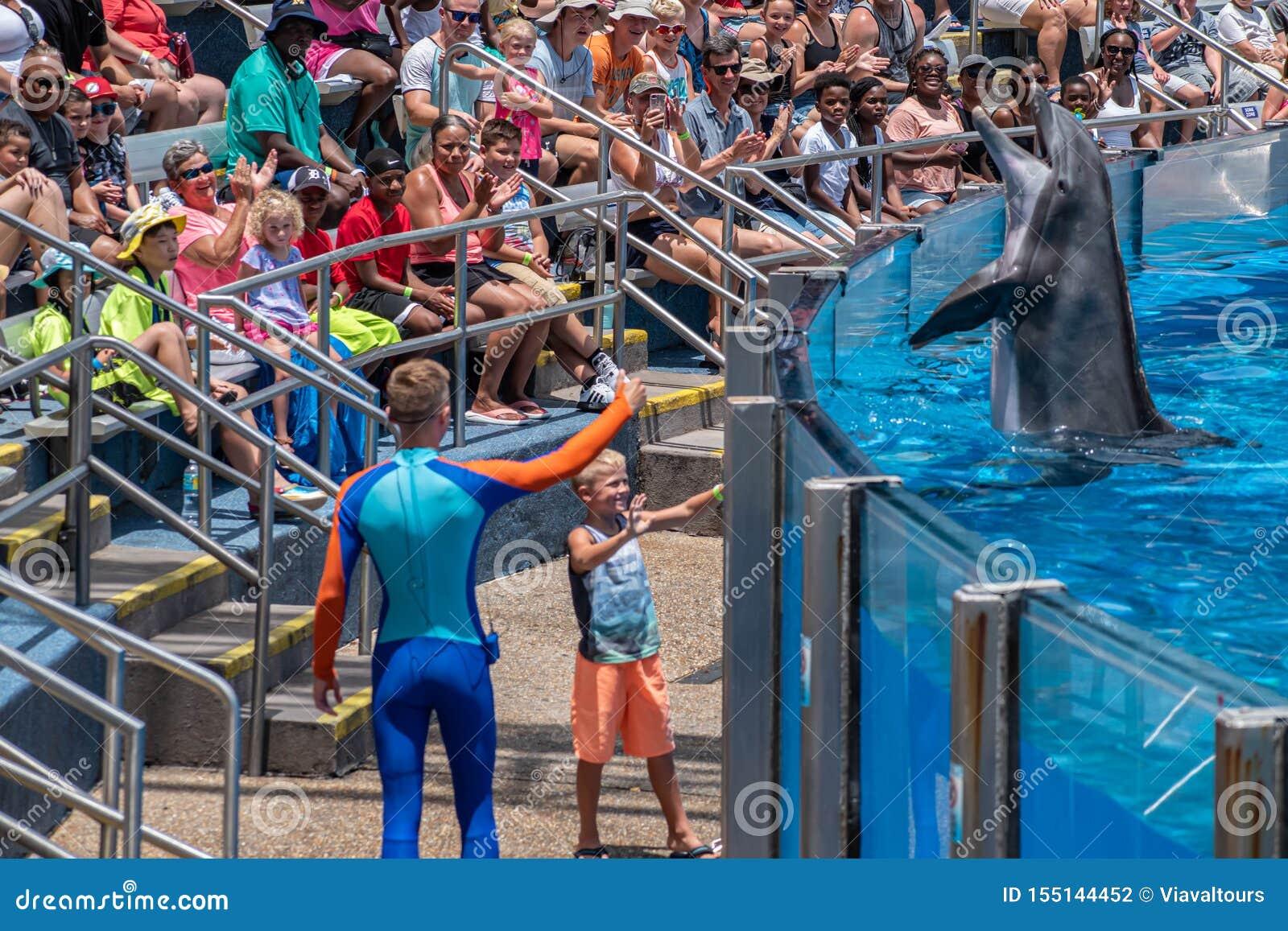 讨人喜欢dolphing的使用与教练员和小孩在海豚天在Seaworld 3显示