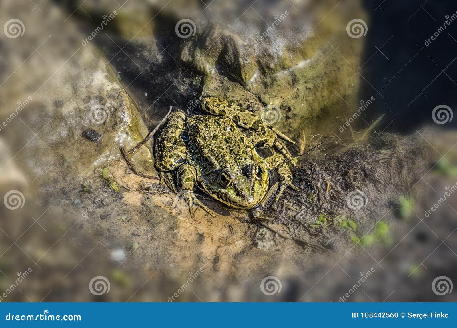 讨厌的青蛙在池塘