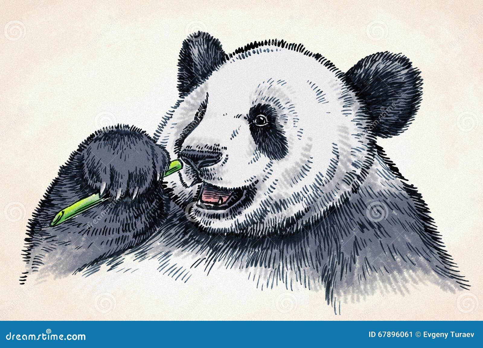 刻记墨水凹道熊猫例证