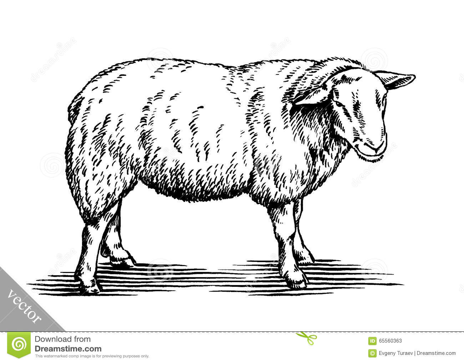 黑白刻记墨水凹道传染媒介绵羊例证.图片