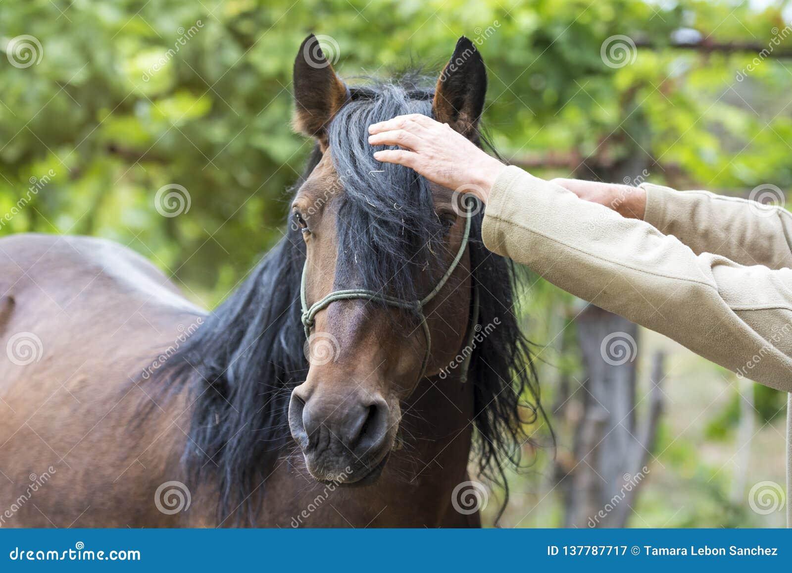 设法梳一匹任性的马