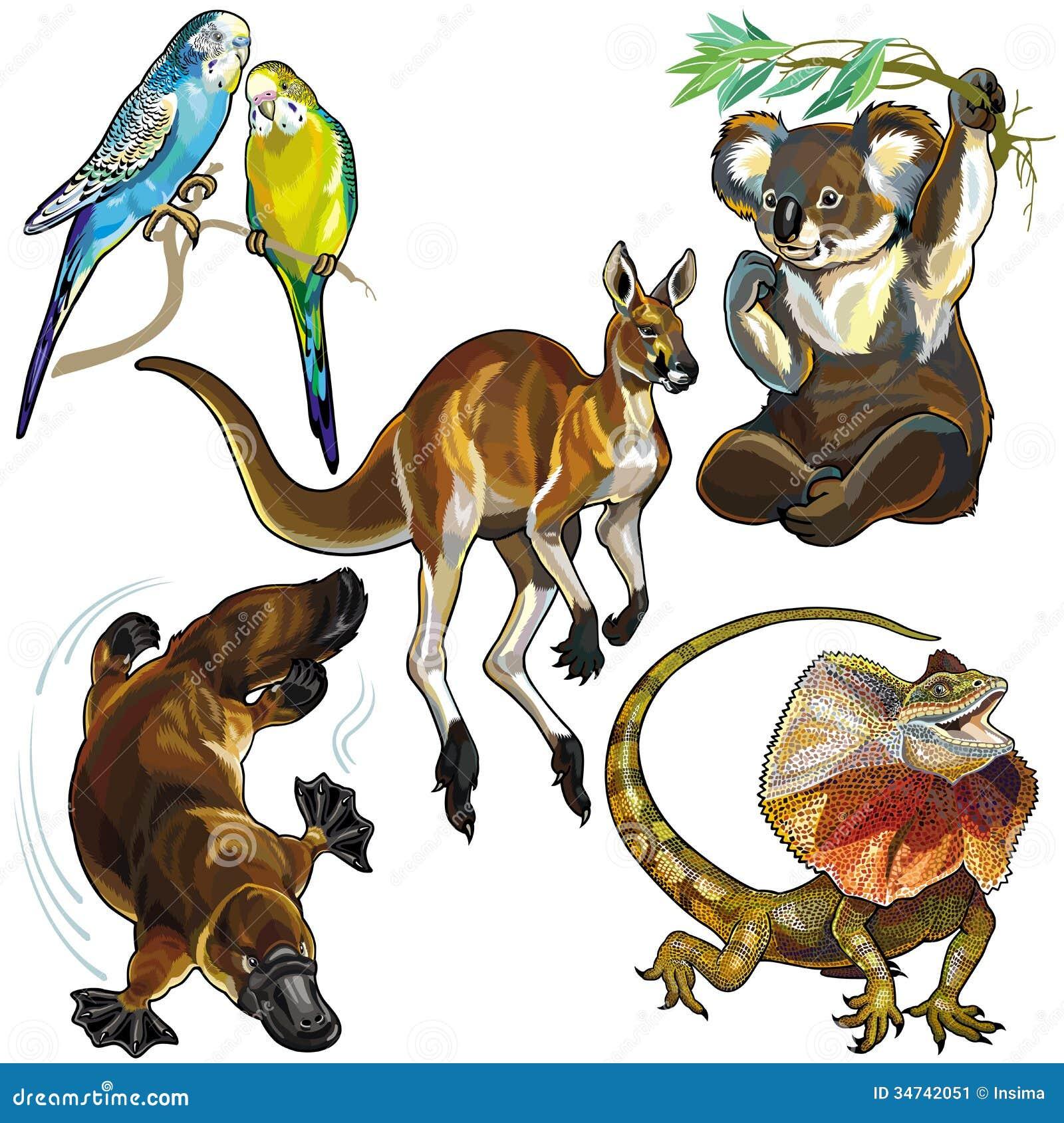 设置与澳大利亚的野生动物