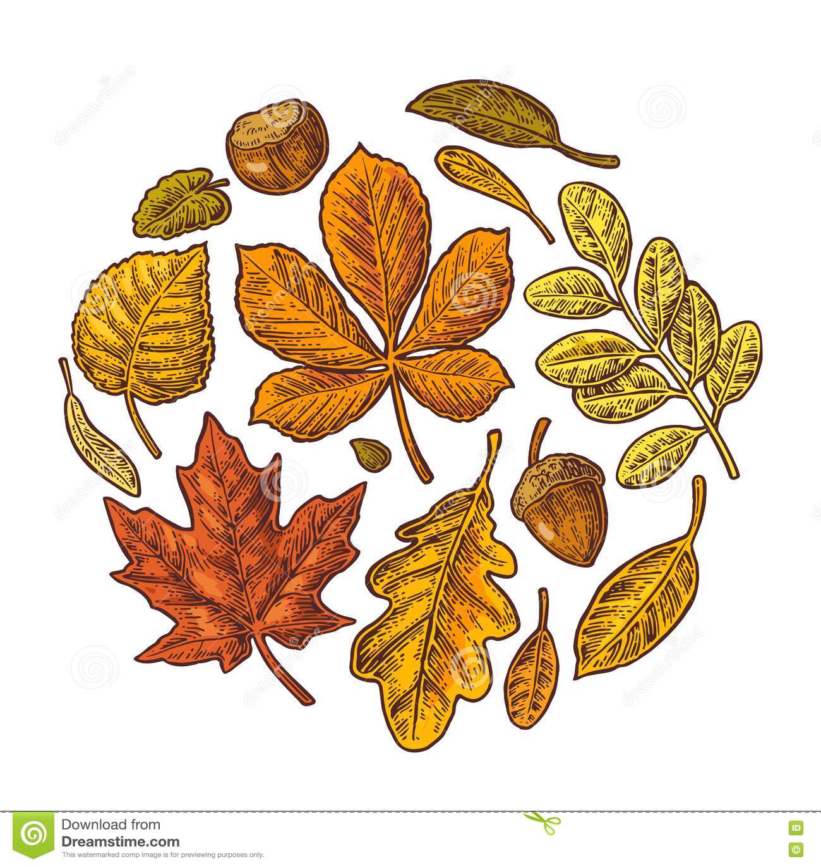 设置叶子和橡子 传染媒介葡萄酒五颜六色的被刻记的例证