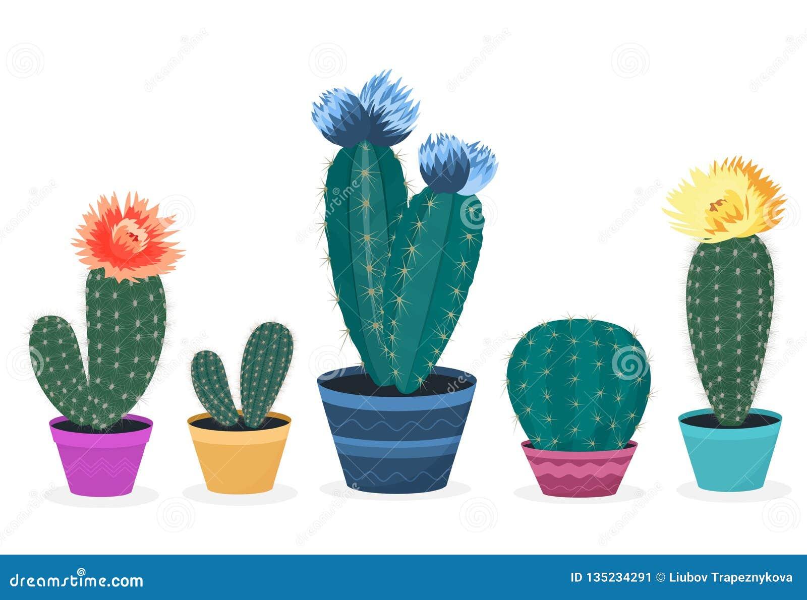 设置开花的仙人掌 仙人掌查出的罐 盆的家庭植物