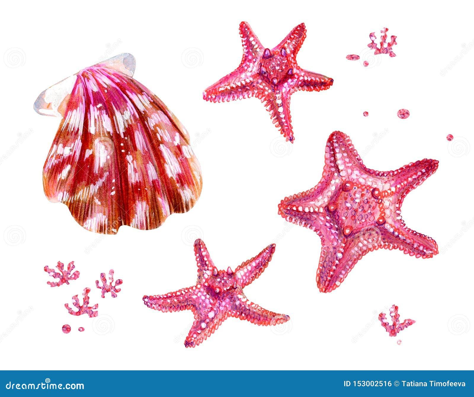 设置扇贝和海星海壳