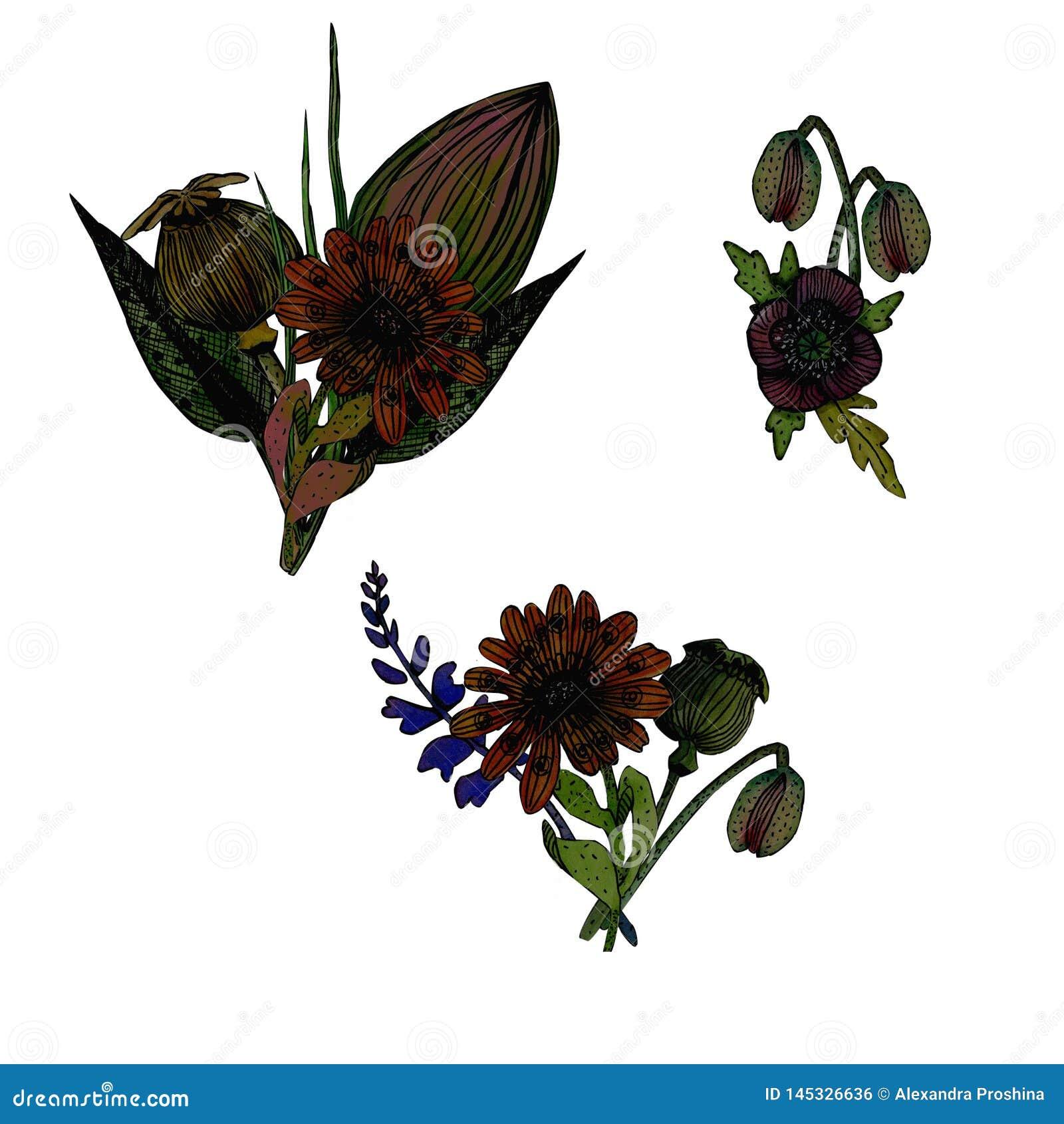 设置水彩花卉例证