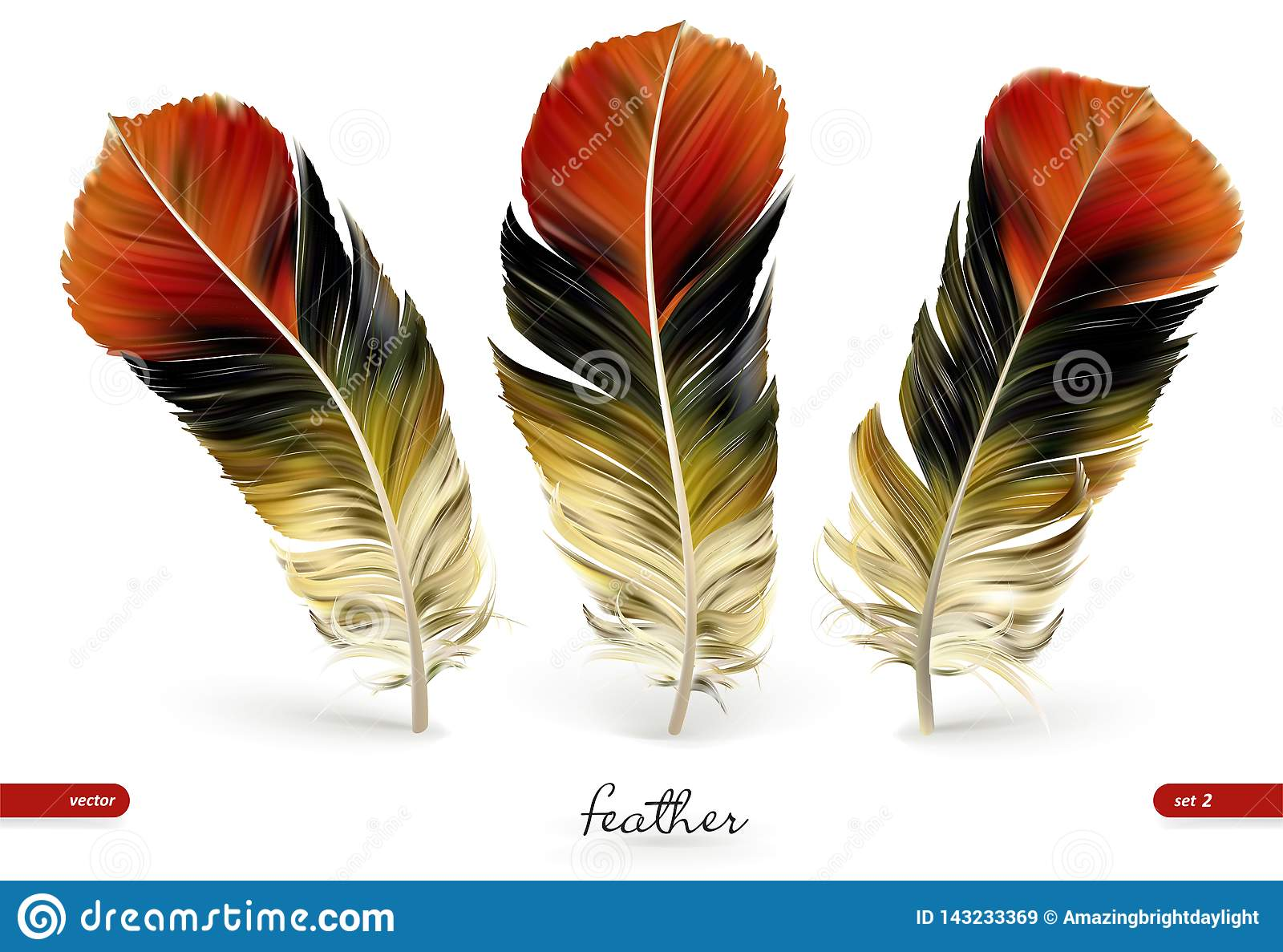 设置现实羽毛-传染媒介例证 背景查出的白色