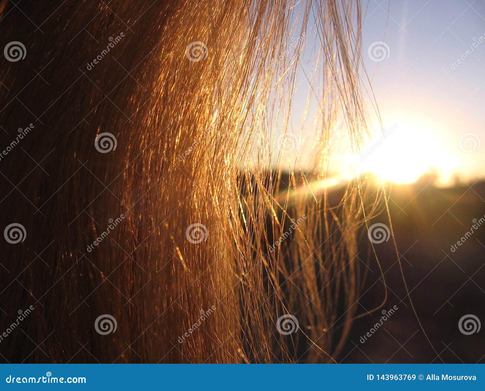 设置的平衡的太阳通过金黄光芒通过头发发光的妇女头发发光