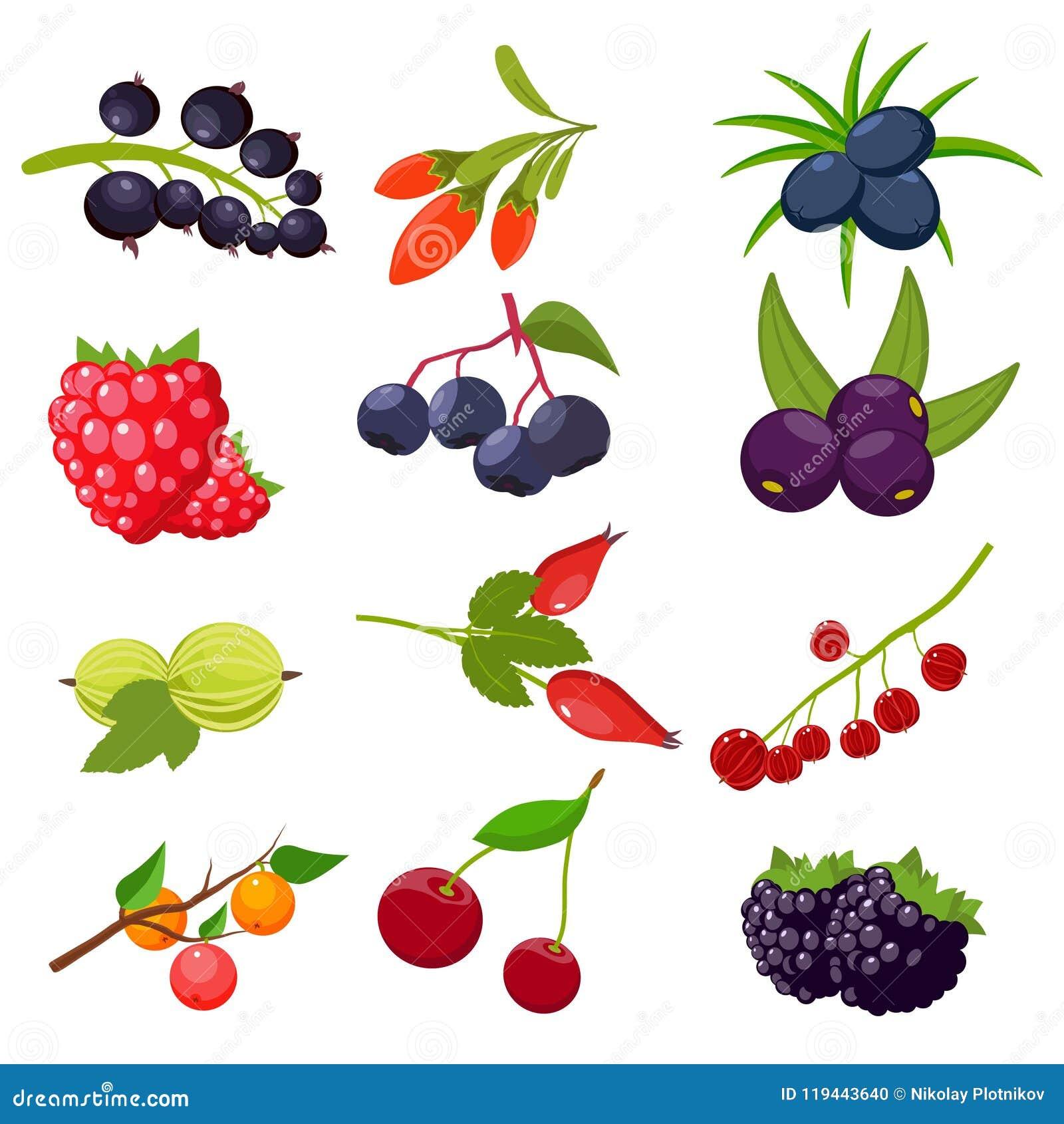 设置莓果被隔绝在白色背景:无核小葡萄干,樱桃,莓,花揪,鹅莓, dogrose,黑莓, goji